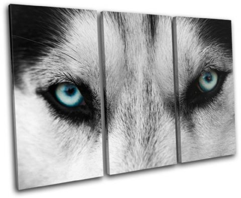 Wolf Eyes Wild Animals - 13-0904(00B)-TR32-LO